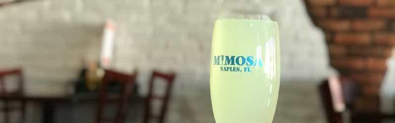 Mimosa of Naples