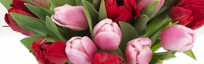Reasor's Floral